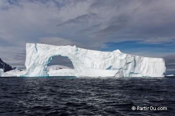 quels végétaux vivent en arctique