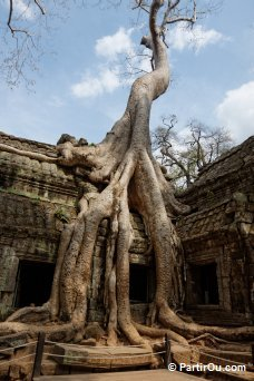 Ta Prohm Angkor - Cambodge