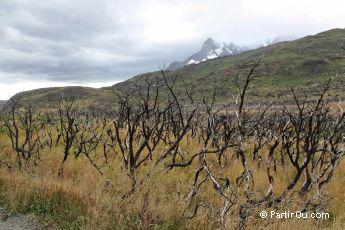 Après un incendie à Torres del Paine - Chili
