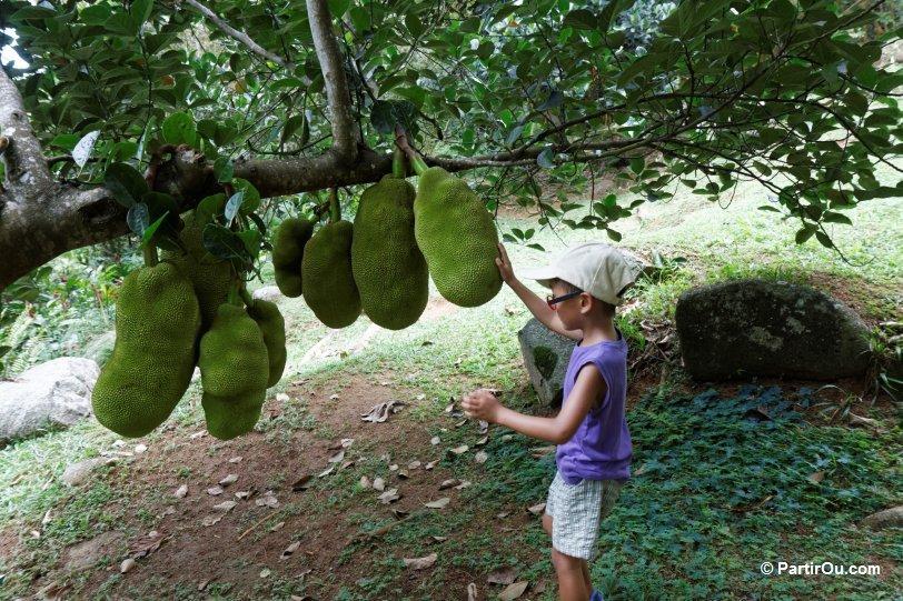 Les fruits exotiques - Liste fruits exotiques avec photos ...